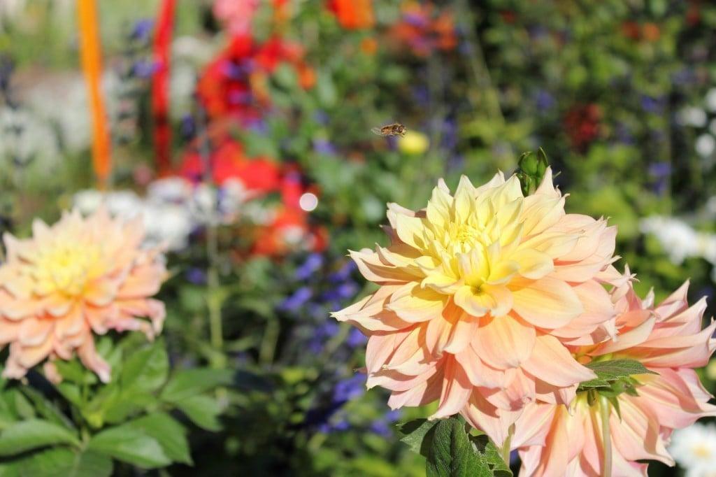 Chihuly at Denver Botanic Gardens | No Thanks to Cake