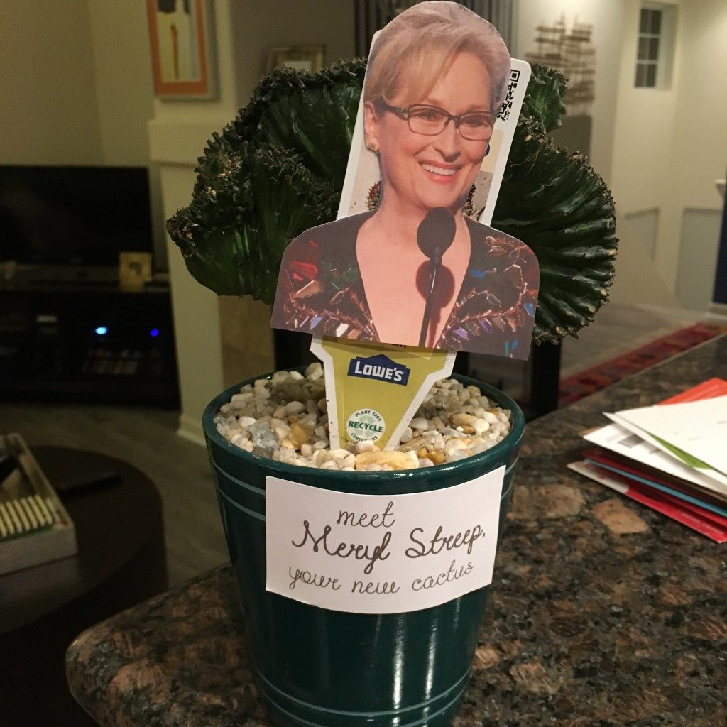 My Cactus Meryl Streep | No Thanks to Cake